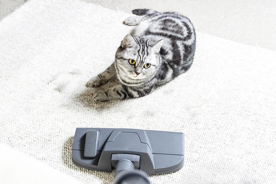 Best vacuums for pet hair.