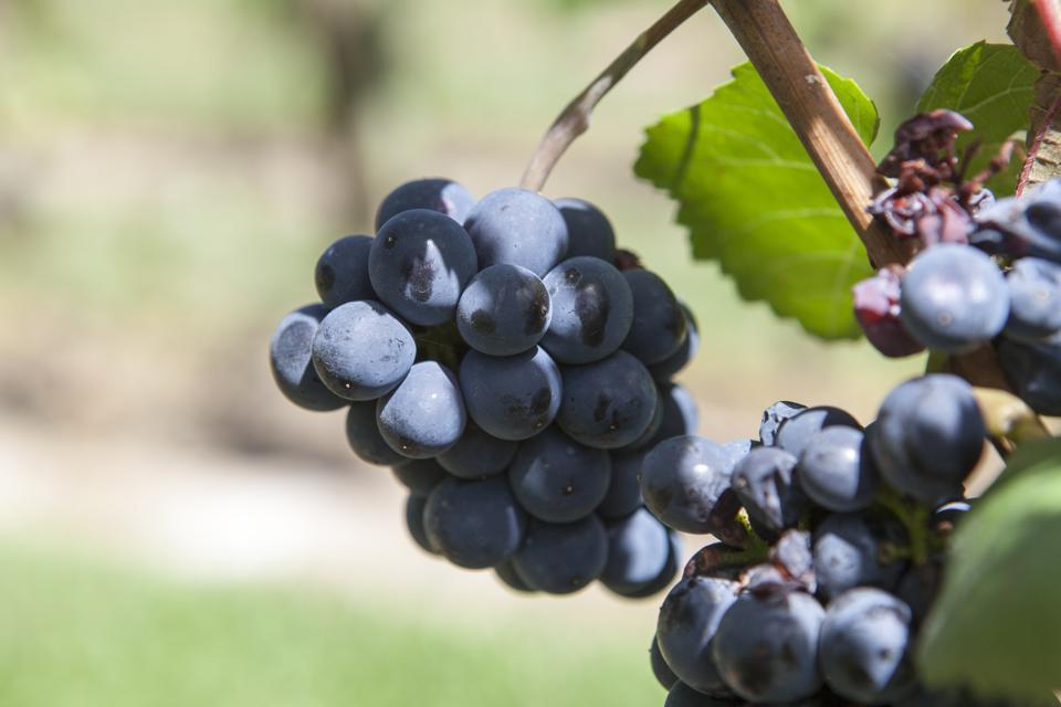 Wine press in Mendoza