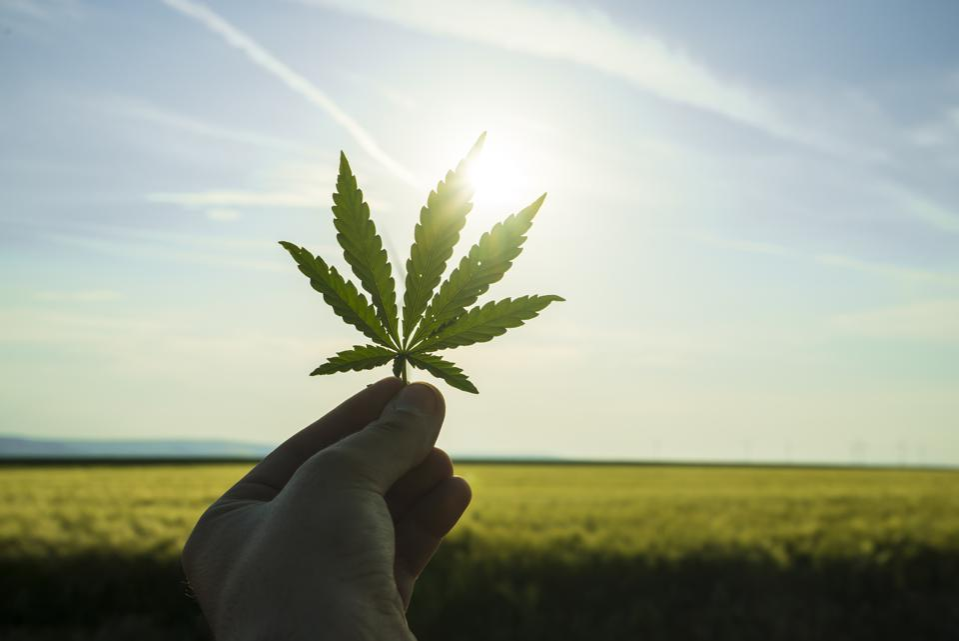 Cannabis leaf against the sky. hand holding a marijuana leaf on a background of blue sky.