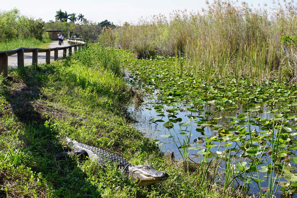 US-BUDGET-POLITICS-PARKS-FLORIDA-EVERGLADES