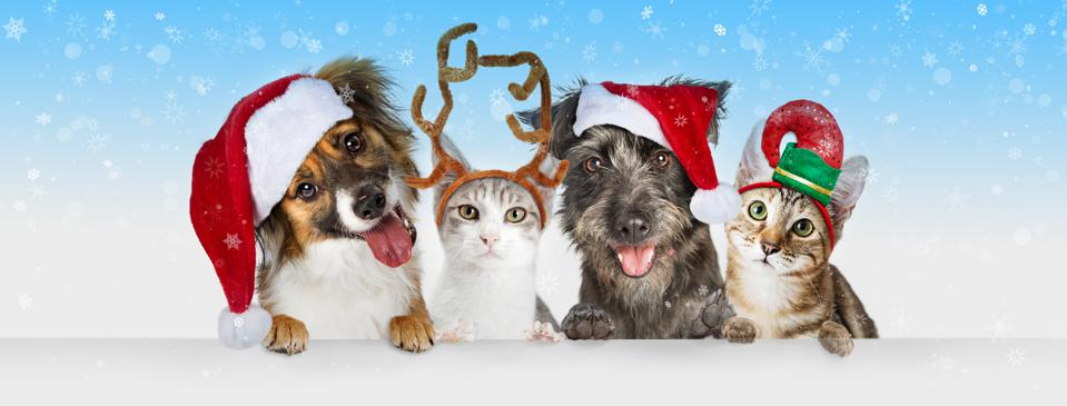 Christmas Dogs and Cats Over White Web Header
