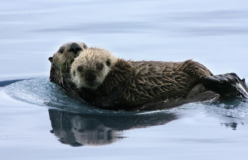 Alaska - The Asahi Shimbun ″Truth Of The Earth″