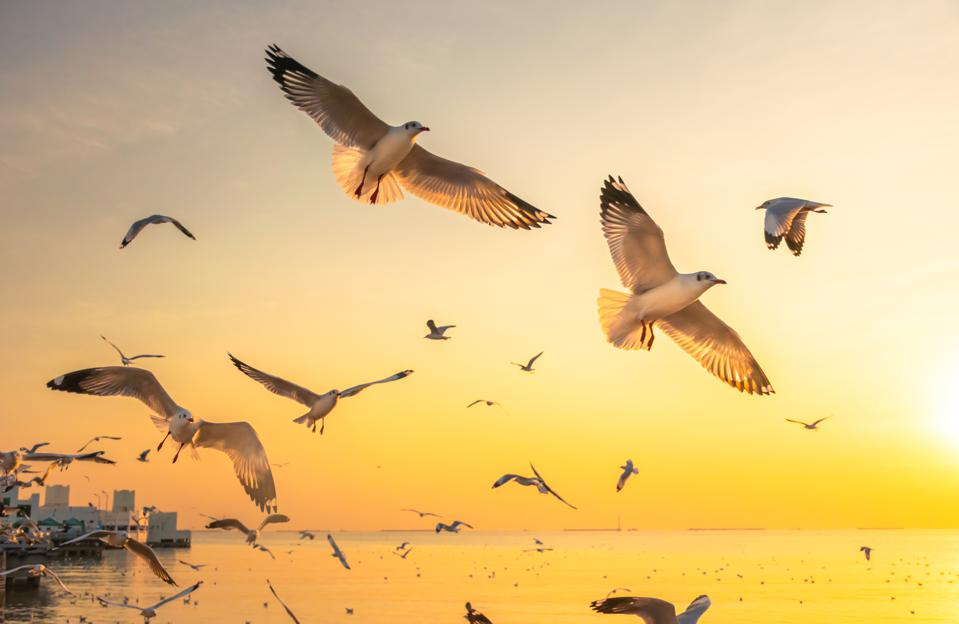 Scenic View of Seagulls Flying on Sea Against Sky During Sunset, Thailand, Asia