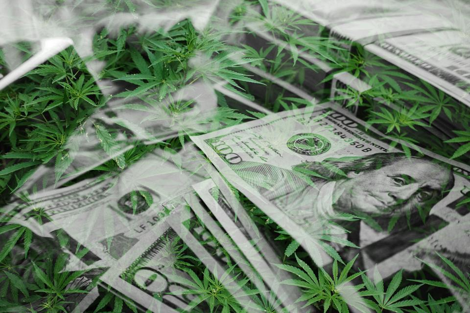 Marijuana seminars promising to help people get rich in the industry are turning out to be scams.