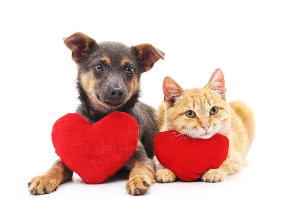 Cat and dog with red hearts for Valentine's Day