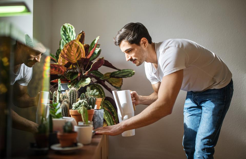 Father's Day Gift Guide: The Best In-Home Gardening Kits