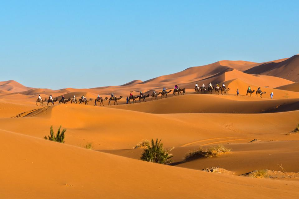 A caravan of camels at Erg Chebbi, Merzouga, Morocco