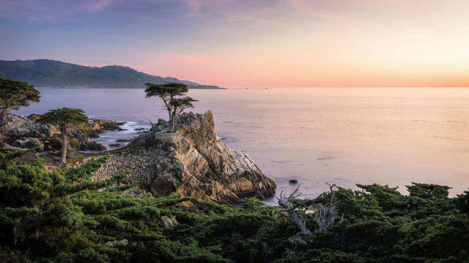 Lone Cypress At Sunset