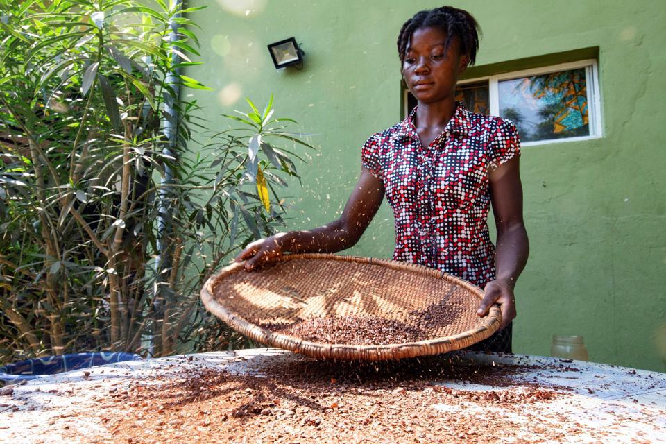 LIBERIA-ECONOMY-COCOA-FOOD-FEATURE