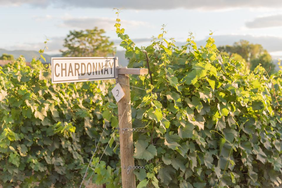 Chardonnay sign on post with grapevines in vineyard