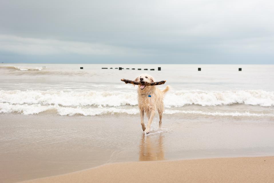 Lake Michigan Beach with Dog