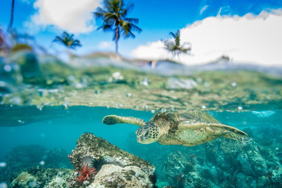 Viajes, presupuesto, vuelos baratos, vuelos baratos, viajes 2020, pasajes aéreos, Hawái, isla