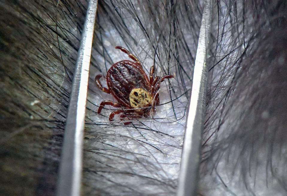 Lyme Disease Vaccine Could Be Ready In 4 to 5 Years