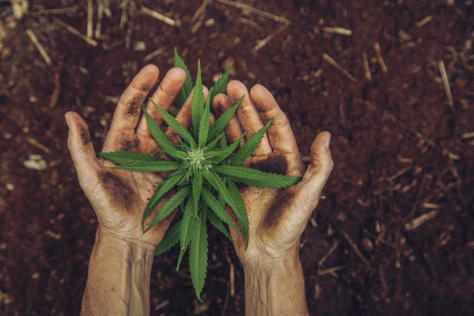 The Brazil Tech And Innovation Roundup: Cannabis Firms Wanted