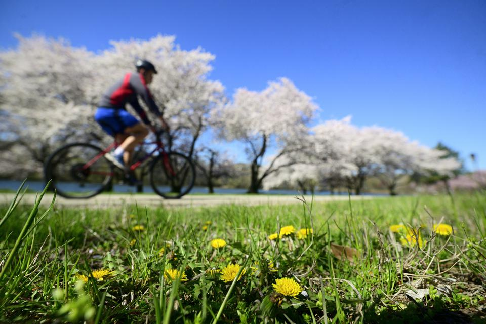 Odd-Shaped Parks May Be Better For Health
