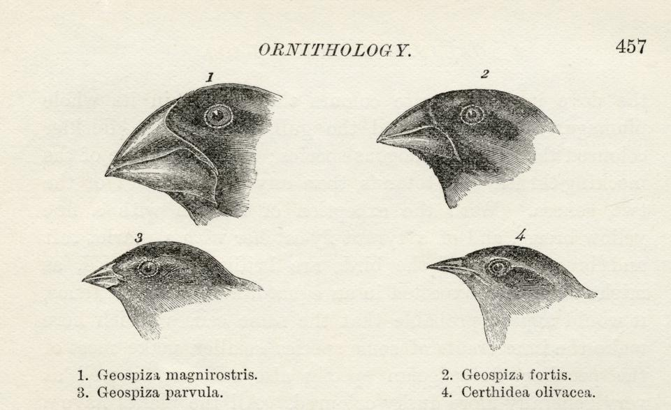 Finches with beaks adapted to different diets