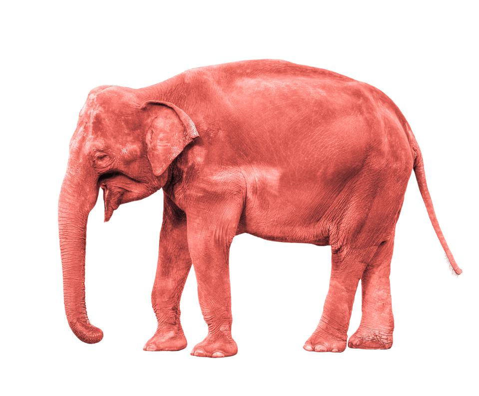 The Pink Elephant In The Workplace: How To Have Conversations About Race, Politics, And Religion At Work