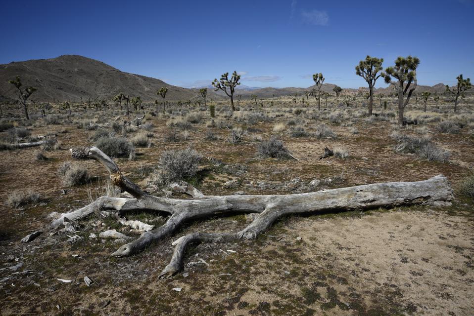 Joshua Tree National Park In California, USA