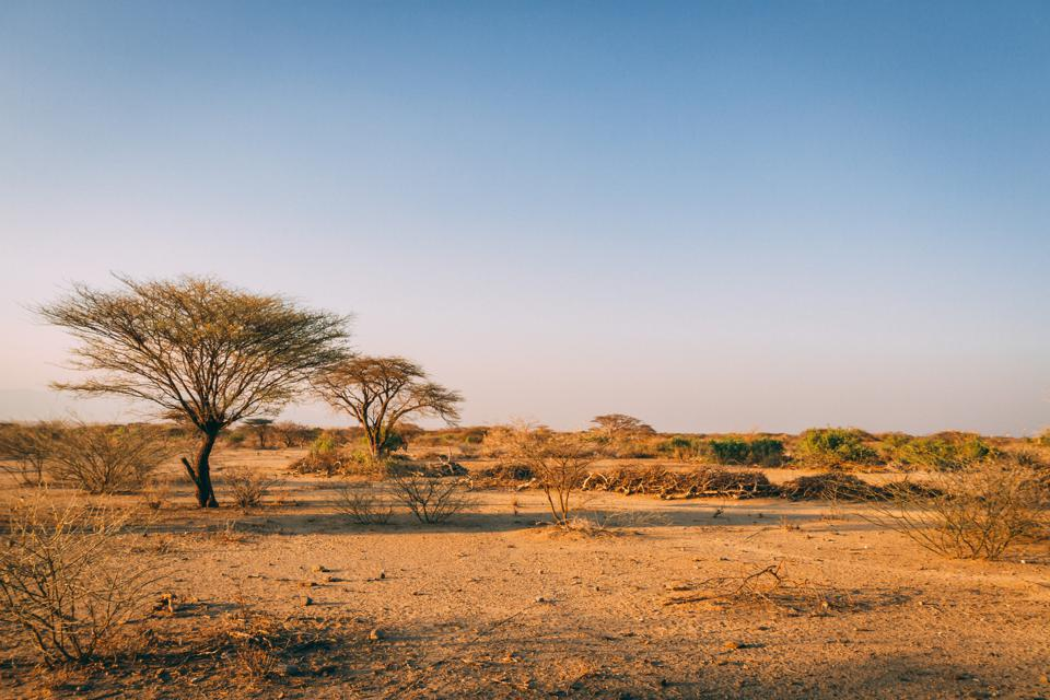 Trees in plains of Africa