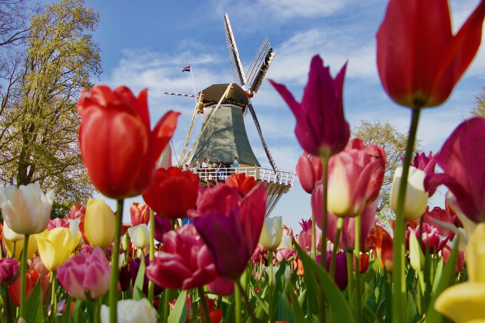 Keukenhof flower park in Netherlands