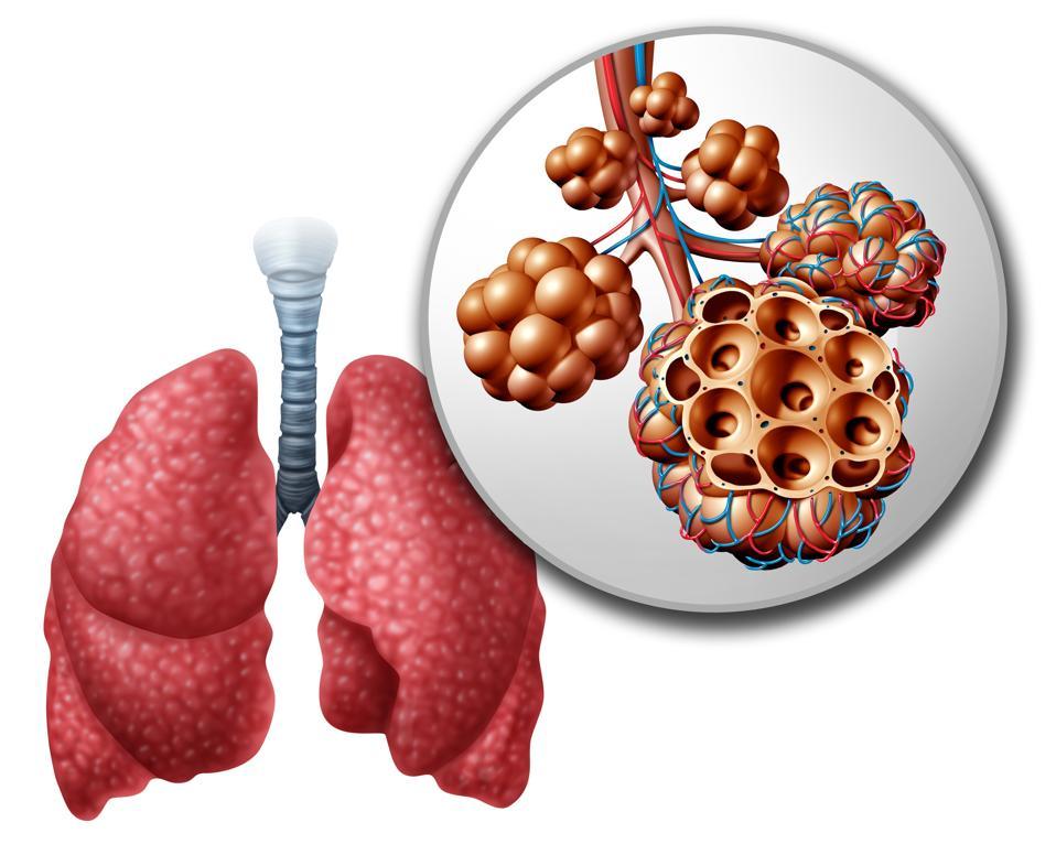 Lung Pulmonari Alveoli