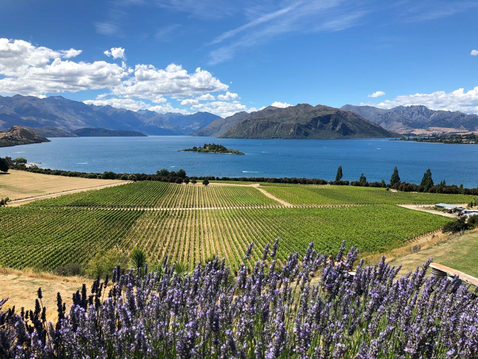 Farmland in Wanaka, New Zealand