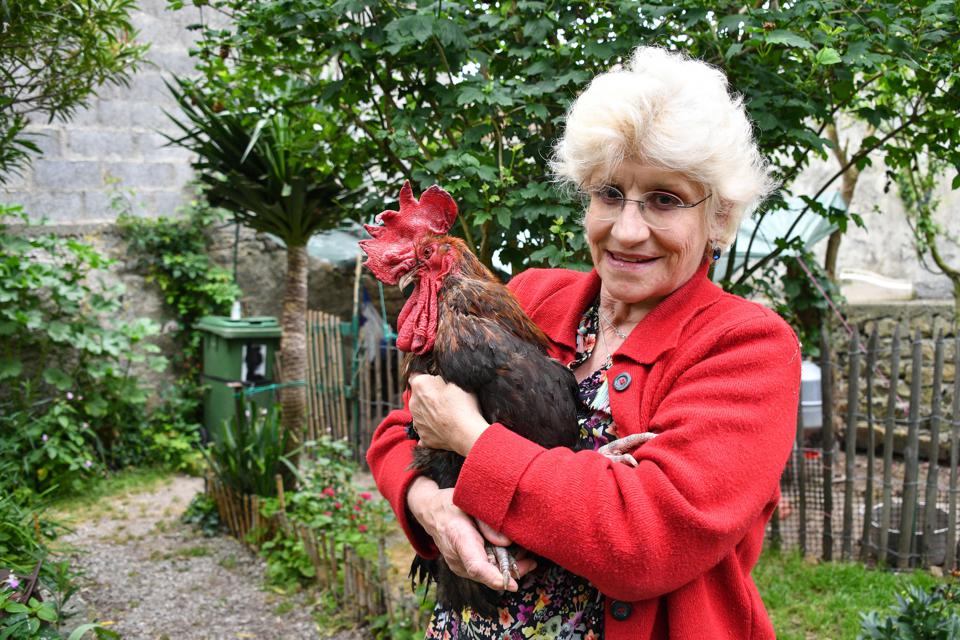 Maurice The French Rooster Wins His Fight Against City Folk