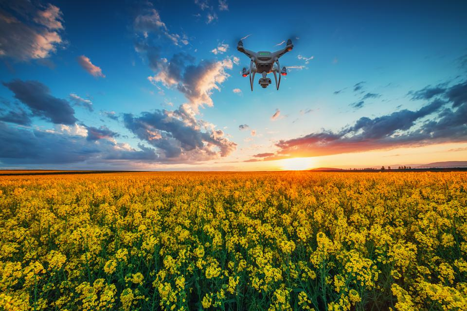 Flying drone over the rapeseed field at spring, dramatic sunset clouds