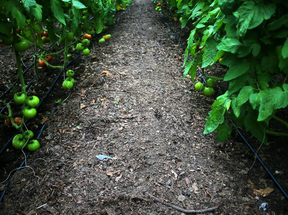 Healthy soil is associated with higher yields and improved crop resilience to extreme weather.