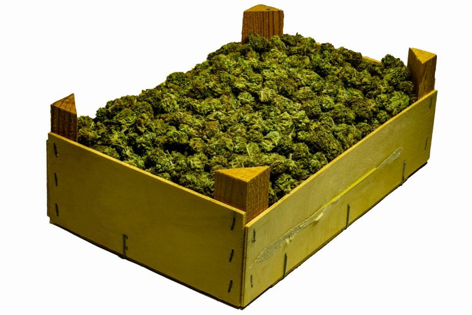 Wooden crate full of marijuana