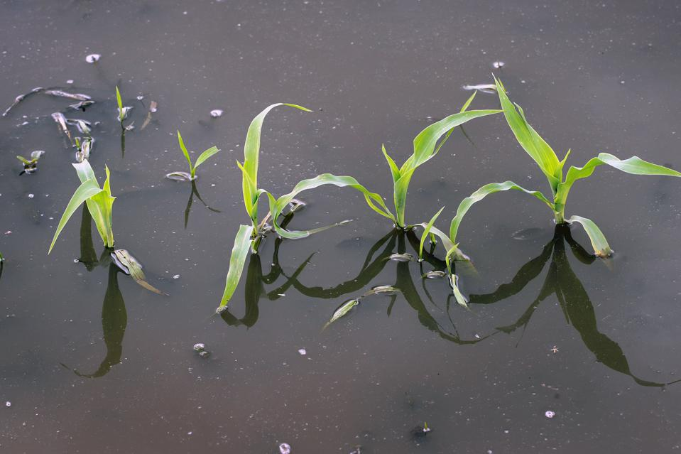 The latest weather predictions indicate the Midwest could be in for a wet spring.