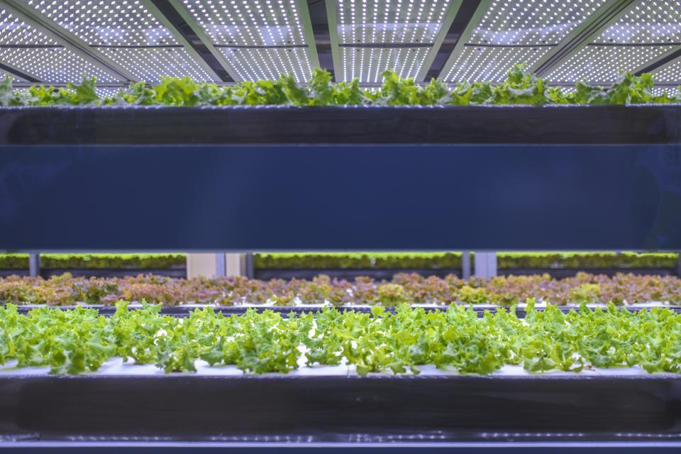 Can Cutting Costs, Via Robotics, Unlock Vertical Farming Profits?