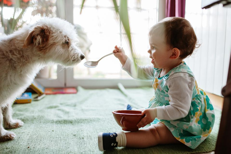 Little girl feeds her dog at home