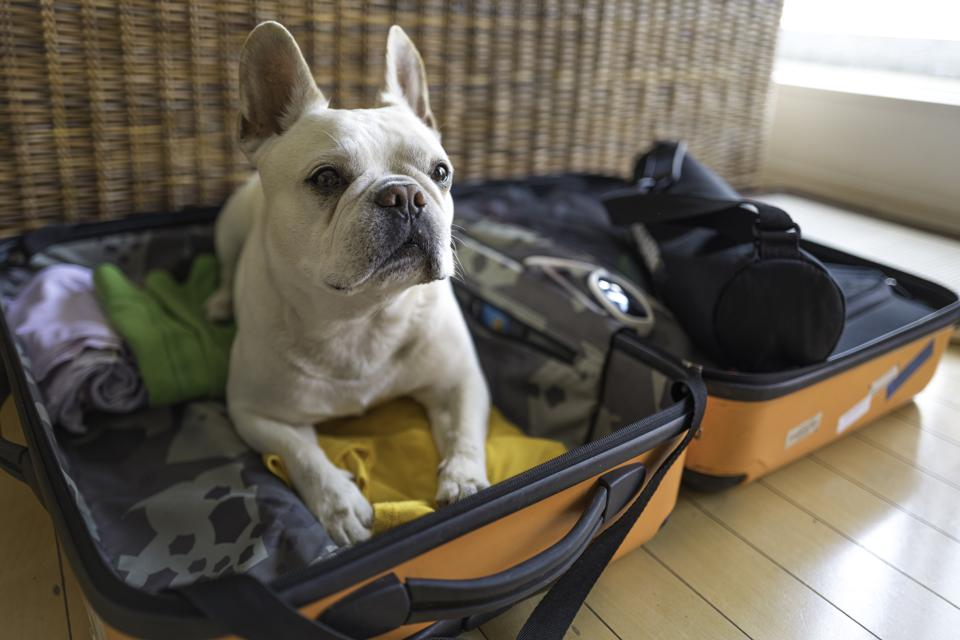 You want me to pack? Traveling with pets.