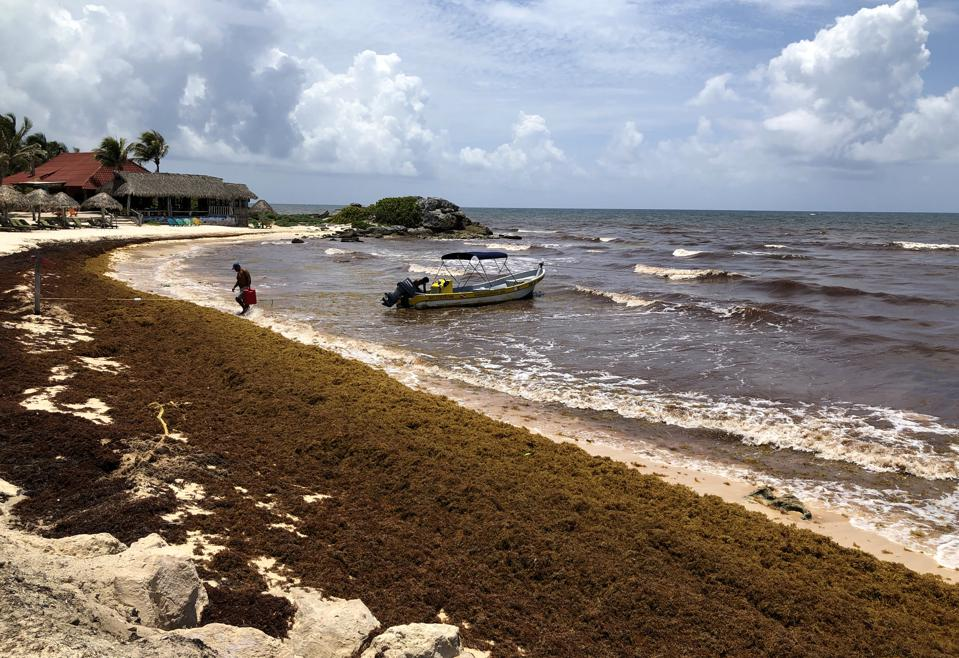 Cancun Is Currently Under Siege By A Stinky Seaweed