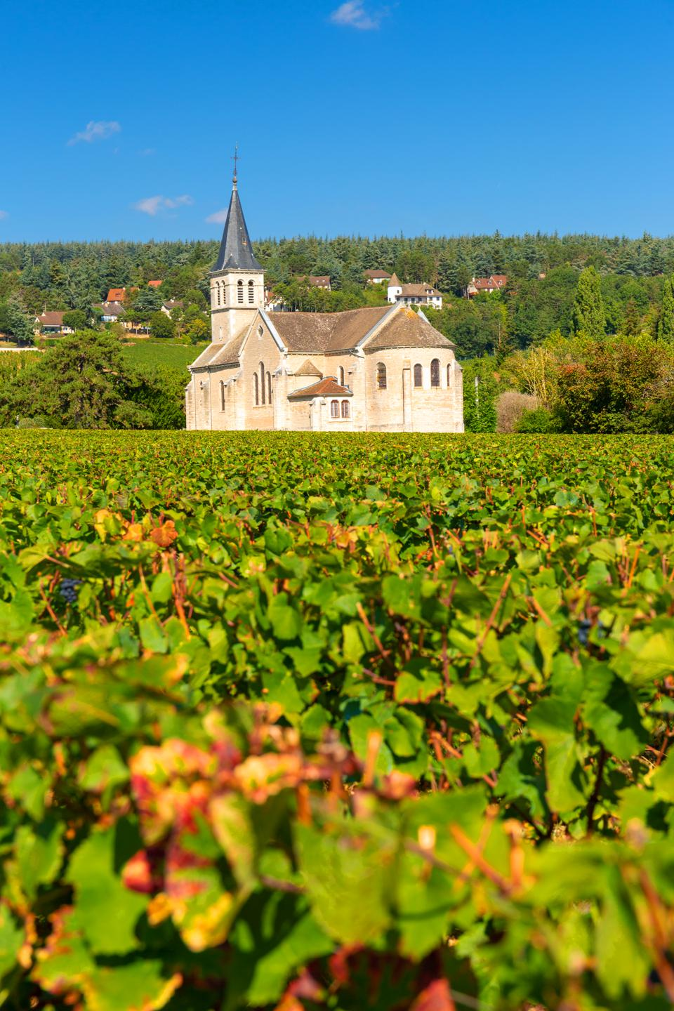 View of vineyards, in Burgundy, France