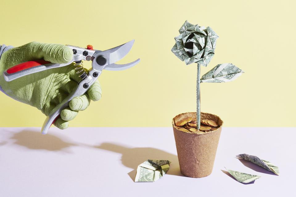 origami dollar plant pruned