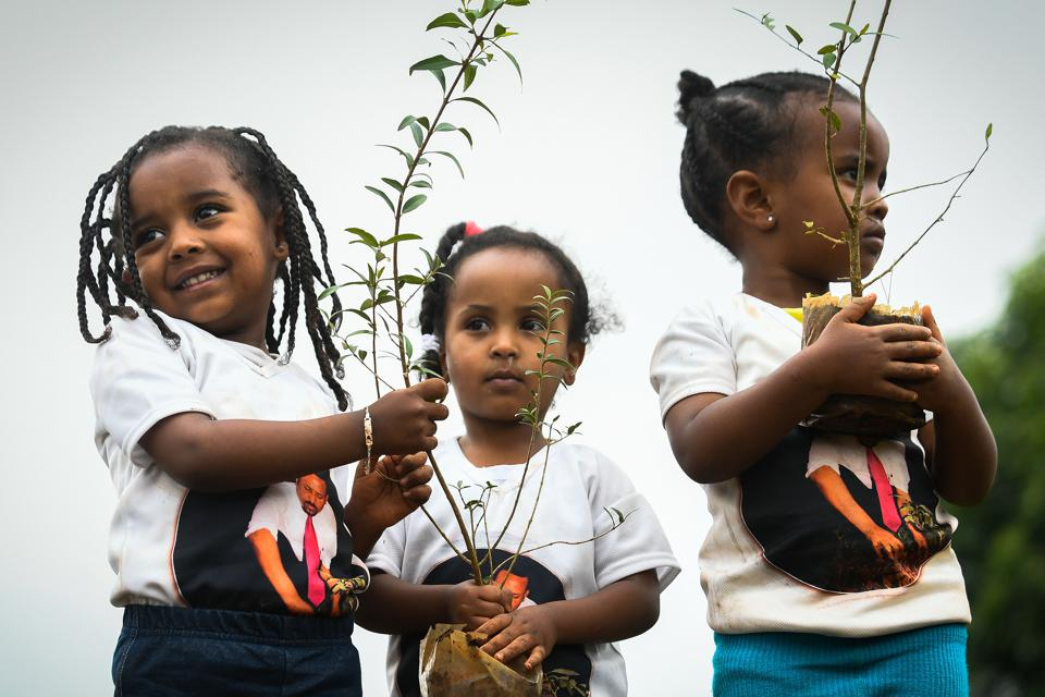 Ethiopia says it planted 353 million trees in one day this year.