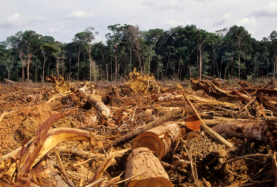 Brazilian deforestation could be leading to lower corn yields.