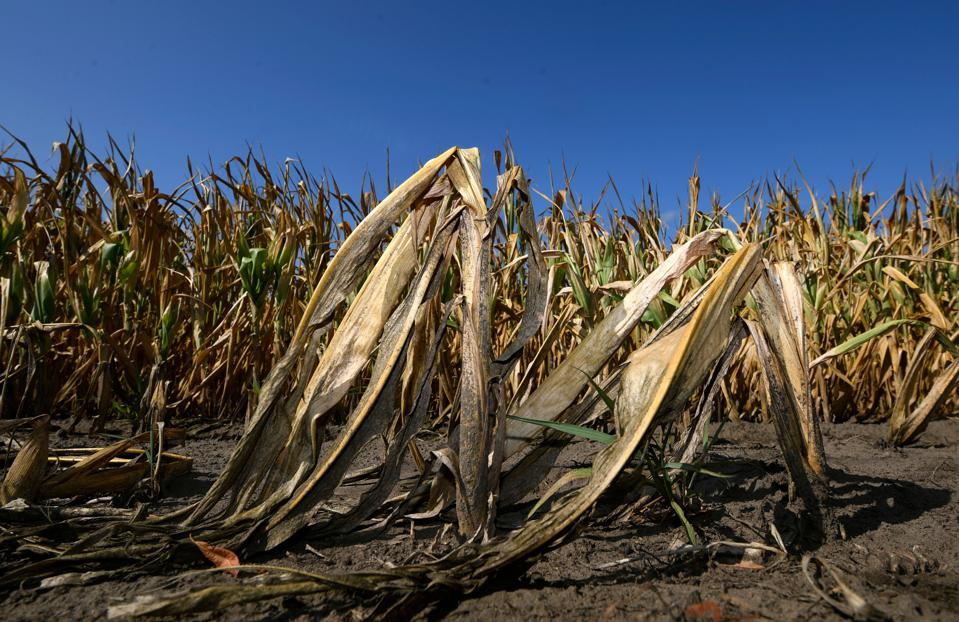 GERMANY-ENVIRONMENT-AGRICULTURE-DROUGHT