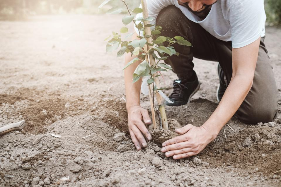 Man planting tree outdoors in spring