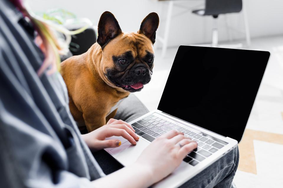 cropped view of cute bulldog sitting near girl using laptop