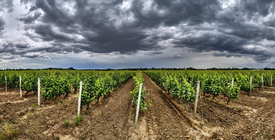 Médoc wine region