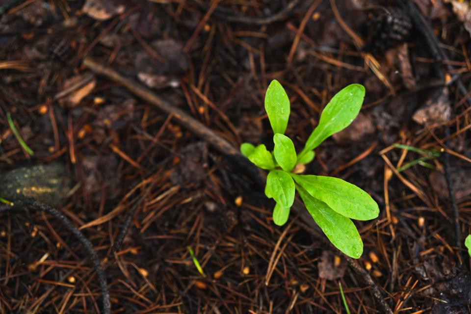 One green sprout growing in a brown soil