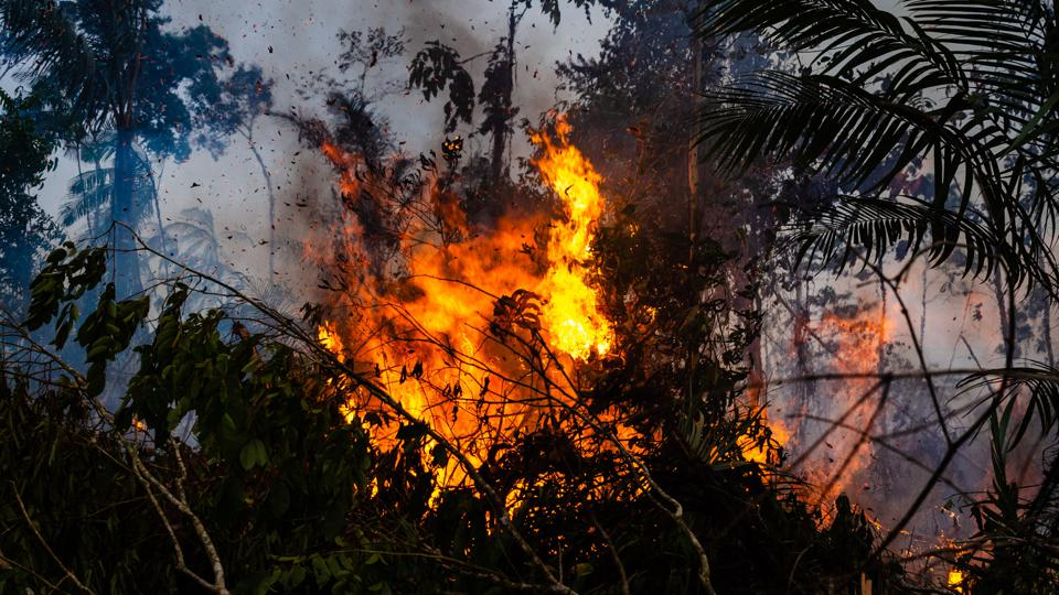 Forest fire in the Amazon rainforest, Brazil.