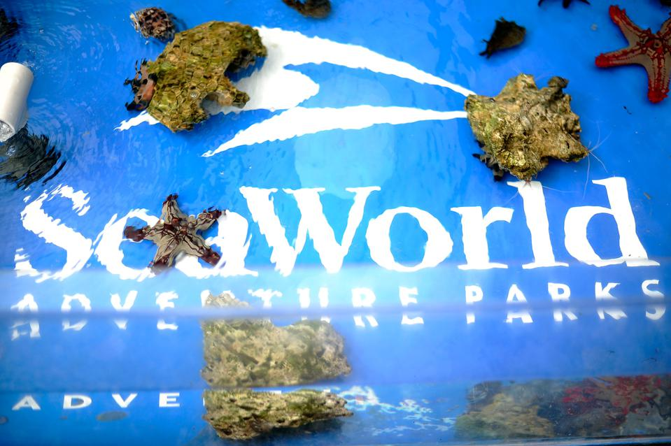 Premiere Of Sea World San Diego's ″Turtle: The Incredible Journey″
