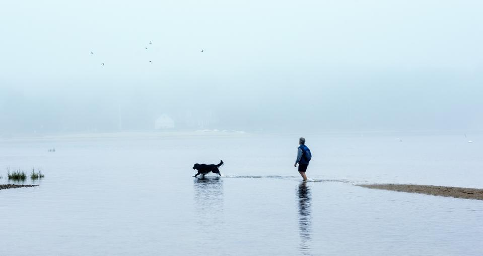 Walking dog at low tide, Cape Cod...