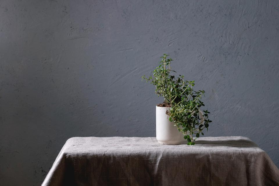 Kitchen table potted gardening greens thyme in white mug over grey linen table cloth. Copy space