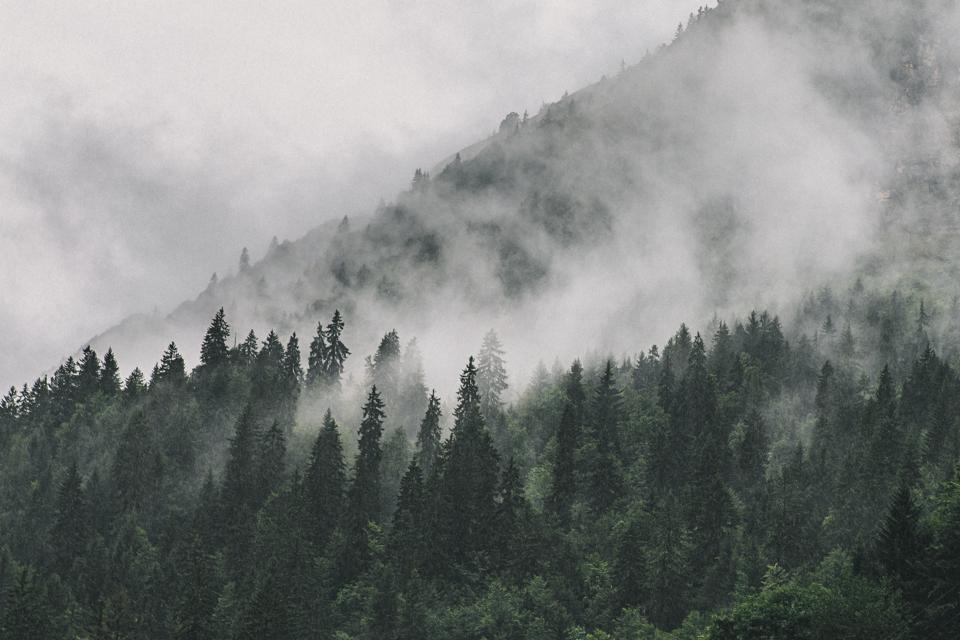 Clouds sitting in Alpine Trees