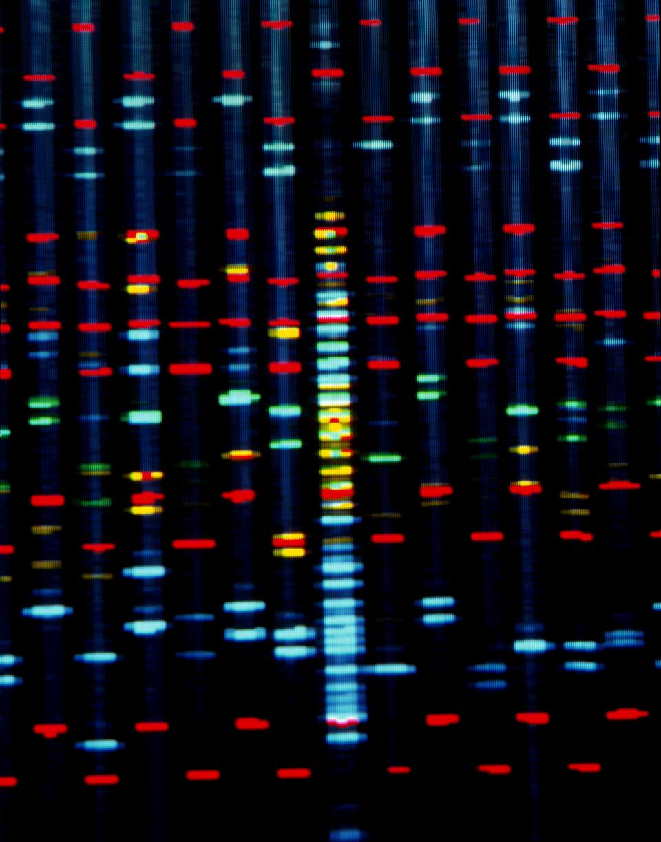 DNA sequence on a computer monitor screen